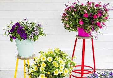 Groot in groen, alles voor tuin en huis
