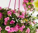 Tijd zomerbloeiers / eenjarigen / perkplanten / balkon