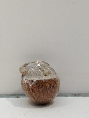 gevulde kokosnoot