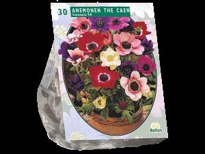 Anemone de Caen, Mix per 30
