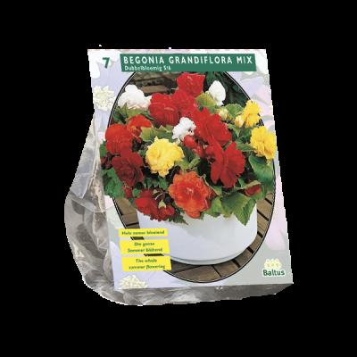 Begonia Dubbel, Mix per 7