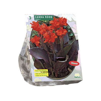 Canna donkerroodblad, Rood per 3