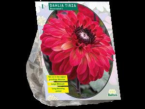Dahlia Decoratief Tirza per 1