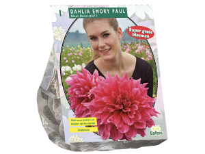 Dahlia Giant Decoratief Emory Paul (SUPER) per 1