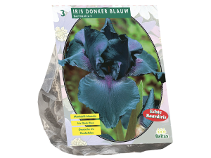 Iris Germanica, Donkerblauw per 3