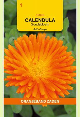 OBZ Calendula, Goudsbloem Ball's Orange