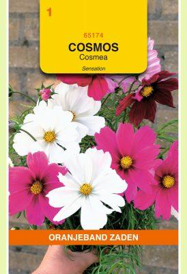 OBZ Cosmos, Cosmea Sensation gemengd