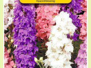 OBZ Delphinium, Ridderspoor Hyacinthbloemig gemengd