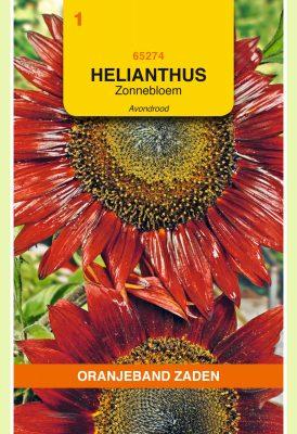 OBZ Helianthus, Zonnebloem Avondrood
