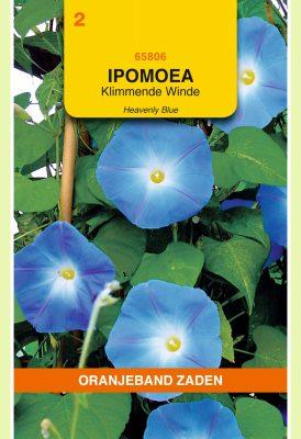 OBZ Ipomoea, Klimmende Winde Heavenly Blue