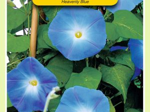 OBZ Ipomoea, Klimmende Winde Heavenly Blue