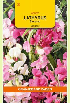 OBZ Lathyrus, Reuk- of Siererwt gemengd, overblijvend
