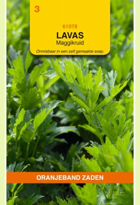 OBZ Lavas (maggiplant)
