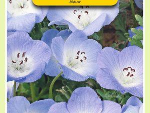 OBZ Nemophila, Haagbloem, blauw
