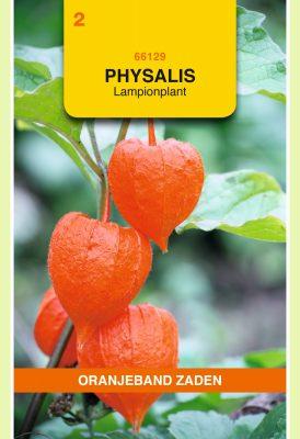 OBZ Physalis, Lampionplant