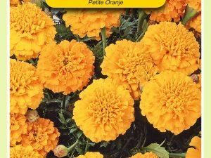 OBZ Tagetes, Afrikaan Petite Orange