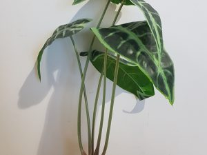 Artificial Alocasia with roots 40cm