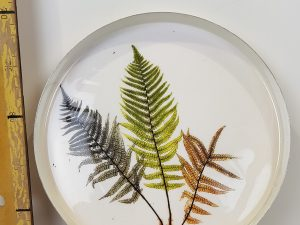 Delta plate decor fern