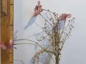 Dried-look klaproos roze - l53xd10cm