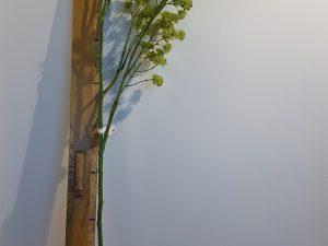 Heracleum l127cm groen
