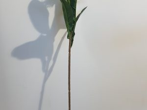 Nutan l62cm oranje