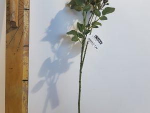 Roos l50cm geel