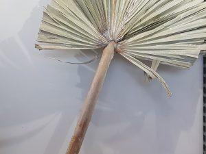 Stem Palm King Spear XlWit