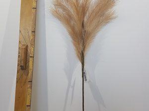 Stem Panicle Grass L72.0L Bruin