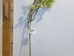 Wildwortel l60cm groen