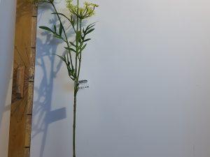 Wildwortel l80cm groen