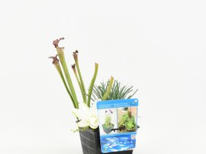 Mix mand met 3 waterplanten
