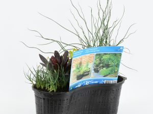 Mixmand ovaal met 3 planten