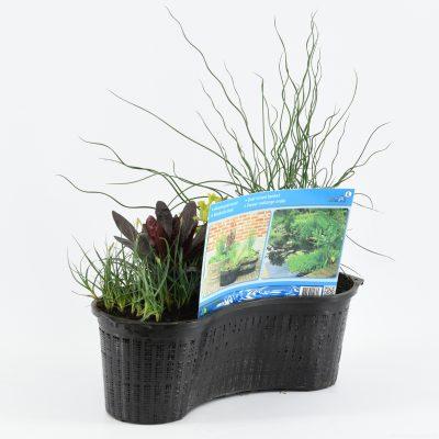Mixmand ovaal 40cm met 3 planten