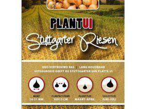 Plantuien Stuttgarter Riesen 100g