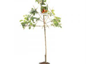 Prunus dom. Victoria leivorm