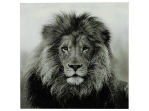 Schilderij leeuw B vk Wild life L zwart/wit