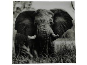 Schilderij olifant vk Dumas zwart/wit