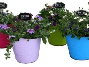 Perkplanten in kunststof Handy basket