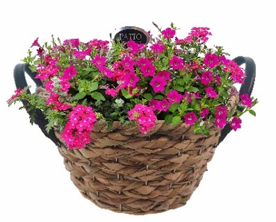 Perkplanten in seagrass basket