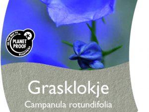 (WI) Campanula rotundifolia