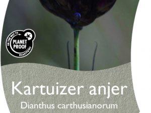 (WI) Dianthus carthusianorum