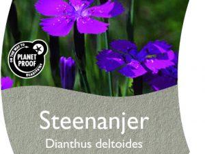 (WI) Dianthus deltoides