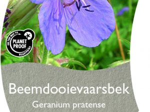 (WI) Geranium pratense