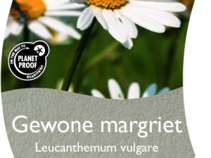 (WI) Leucanthemum vulgare
