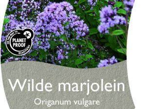 (WI) Origanum vulgare