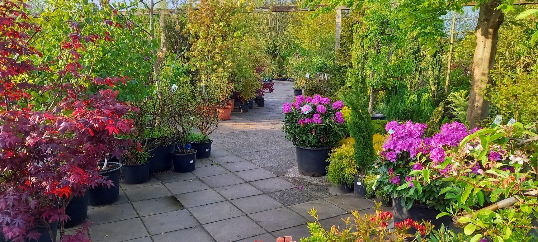 Vanaf vrijdag tm Zondag is de kruising E10 gesloten voor onderhoud, vanuit Leeuwarden kunt ons bereiken via Lekkum, Gytsjerk en Ryptsjerk. Overige richtingen zijn we gewoon bereikbaar. Welkom bij de Florahoek! We hebben een ruim assortiment Vasteplanten, heesters, (meerstammige) bomen en kamerplanten. Nu eenjarigen/perkplanten normaal 3 voor 5 nu 3 voor slechts €3,99!! oa Petunia Surfinia Bacopa Disacia Helichrysum Bidens Calibrachoa Enz.