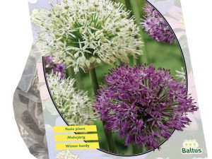 Allium Giant Mix per 3